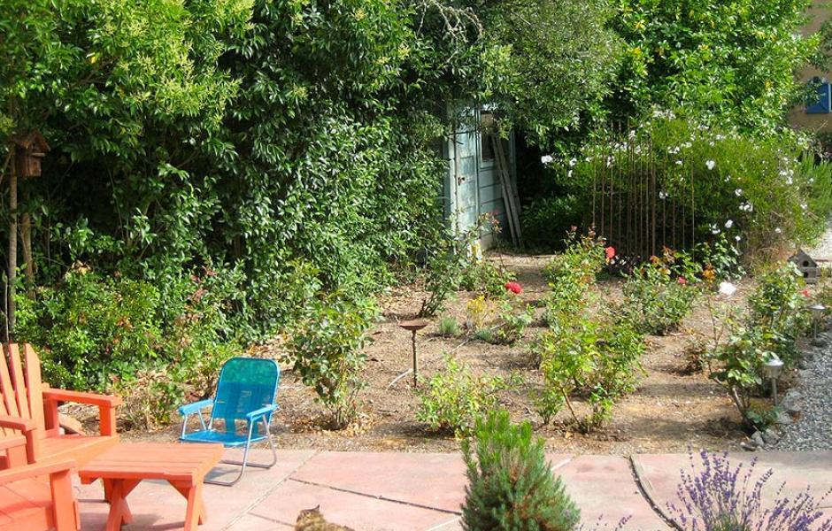 Guerneville Rose Garden After