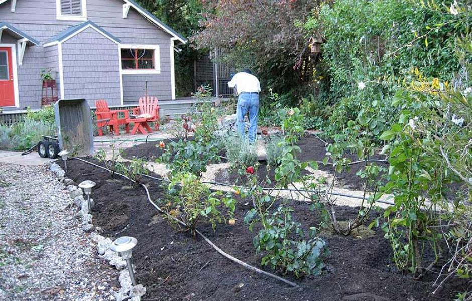 Guerneville Rose Garden Before