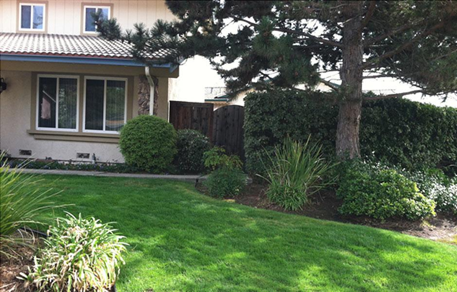 Pleasant Hill Lawn Transformation After